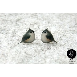 Ptáček šedý – menší